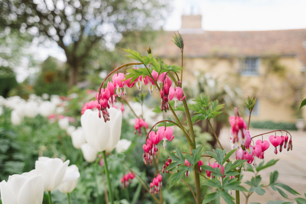 Spring Tulips and flowers at South Farm Cambridgeshire Barn Wedding Venue