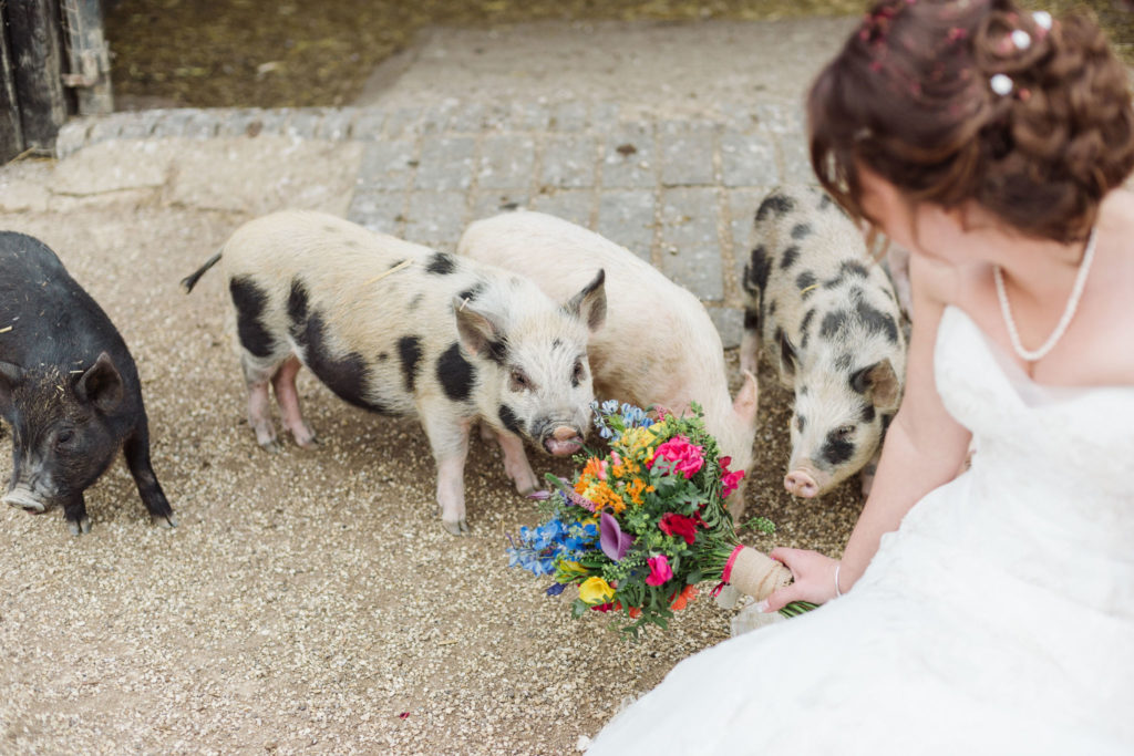 Bride with colourful Spring bouquet and piglets at farm wedding venue